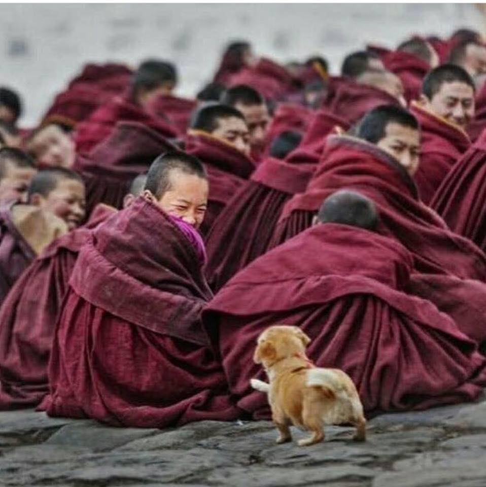 A Buddhist perspective on animals