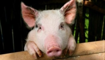 7 questions to ask about animals and us (part one) – Kadampa Life