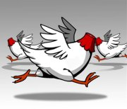 headless chicken too busy doing nothing