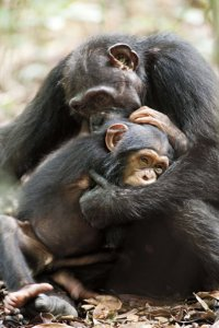 Oscar and Isha in the movie Chimpanzee