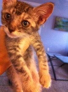 foster kitten Buddhism