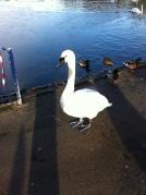 Sefton Park Liverpool meditation