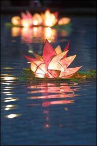 lotus 6