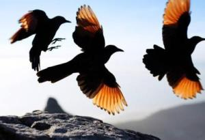 birds flying from one nest to the next, rebirth