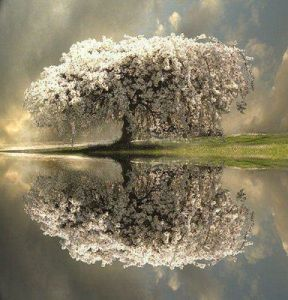 reflection of tree