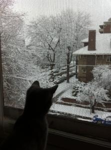 cat looking at Denver