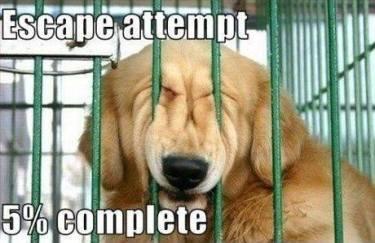 help everyone escape