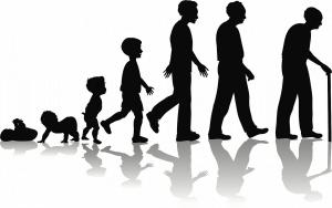 human life cycle 2