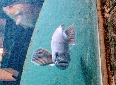 Help fish