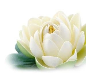 lotuss