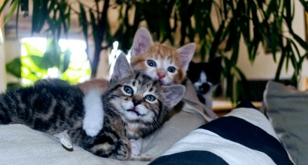 All three kittens