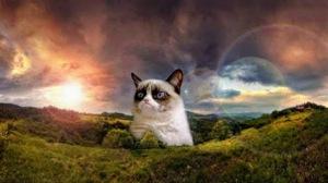 grumpy cat in landscape