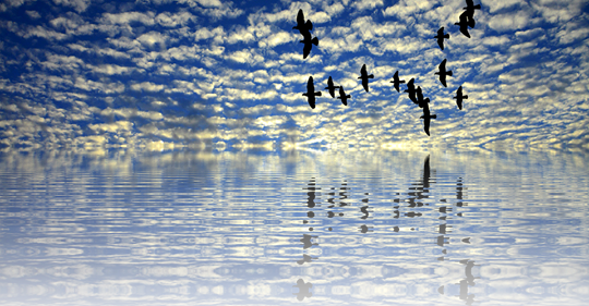 birds flying image.png