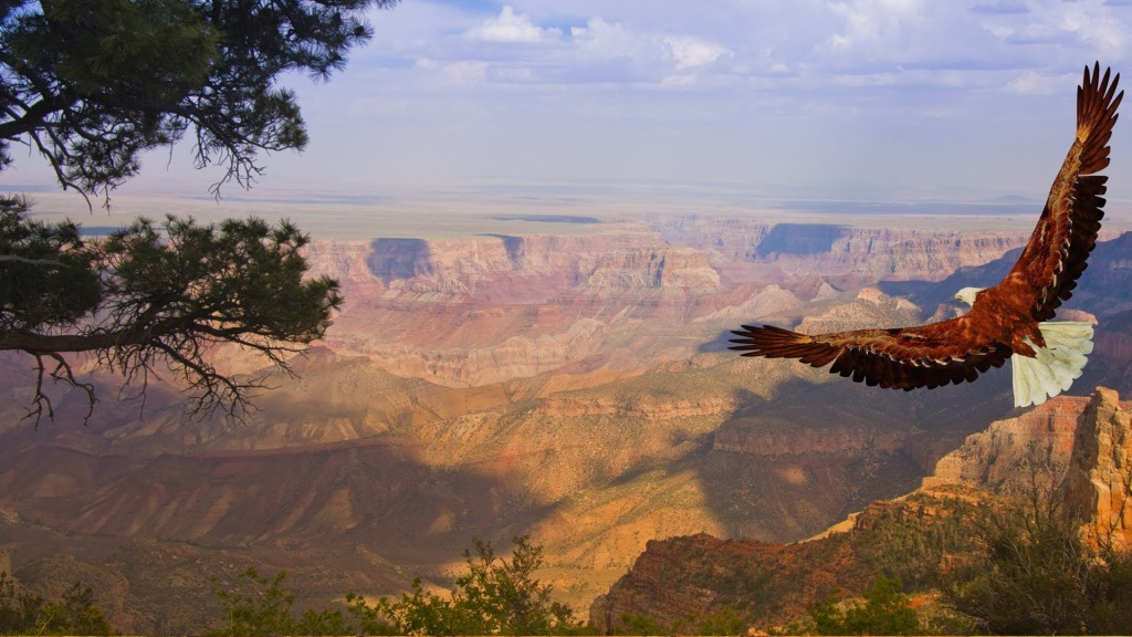eagle in grand canyon
