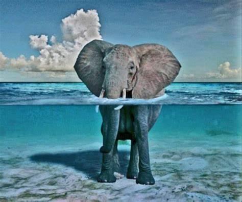 elephant in water.jpeg